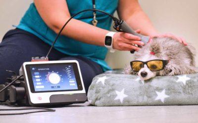 Akupunktio, laserterapia ja kiropraktiikka